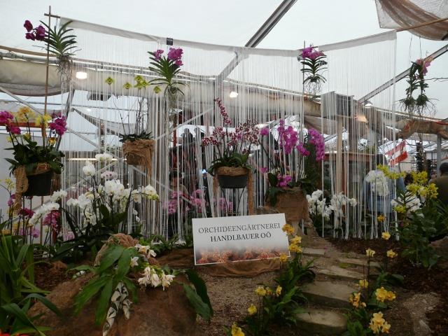 Výstava orchidejí v Rakúsku